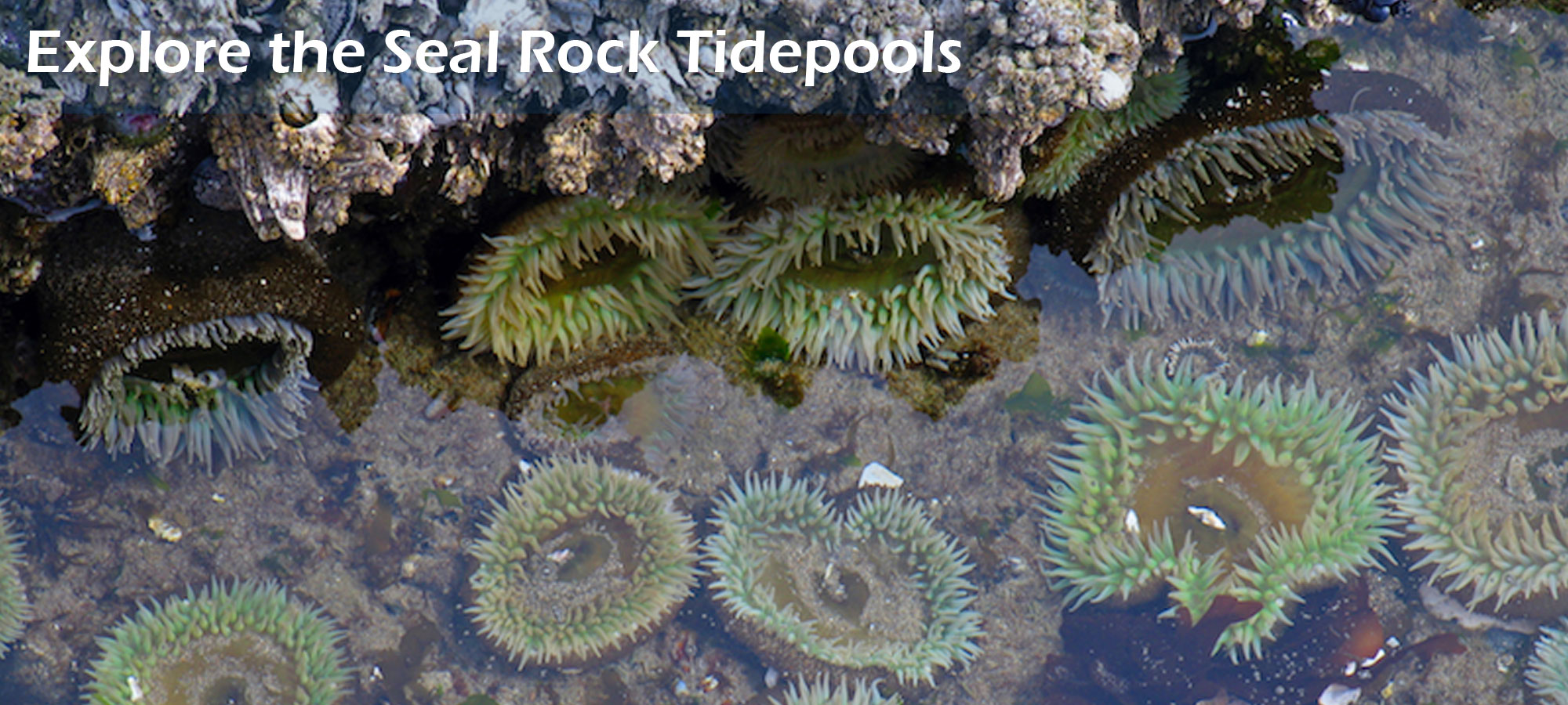 Explore the Seal Rock Tidepools