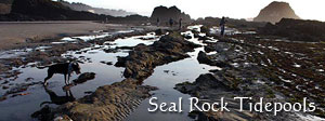 Seal Rock Tide Pools